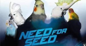 Wszystkie ptaki grają