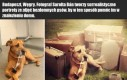 Portrety bezdomnych psów