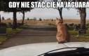 Budżetowy Jaguar
