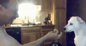 Pies i magiczna sztuczka