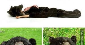 Niedźwiedziowy śpiwór