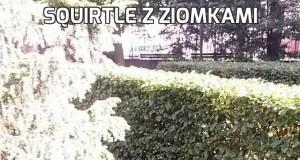Squirtle z ziomkami