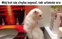 Koteczku?