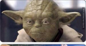 Kot Yoda