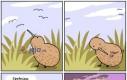 Życzenia kiwi