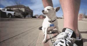 Wyluzowany pies