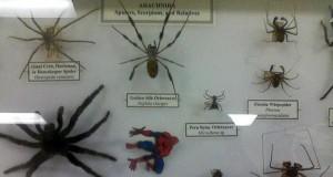 Kolekcja pająków