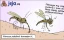 Informatyczne komary