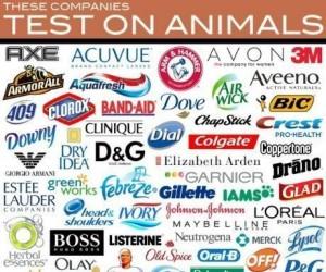 Kosmetyki z Avonu testowane na psie