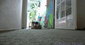 Mały koteł ćwiczy skradanie