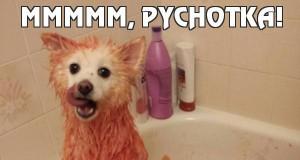 Mmmmm, pychotka!
