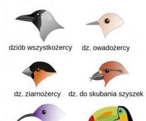 Ptasie dzioby i ich przeznaczenie