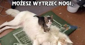 Patrz na mój nowy włochaty dywan