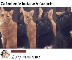 Kocie zaćmienie