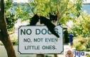 Żadnych psów, nawet małych