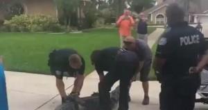 Policja vs aligator