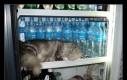 Twój kot śpi w lodówce
