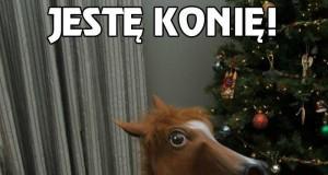 Jestę konię!