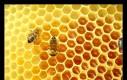 Miód pszczeli to jedyny produkt spożywczy, który nie ulega przeterminowaniu