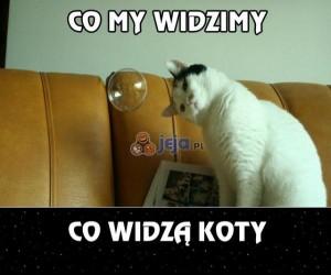Koty dalej chcą zawładnąć światem...