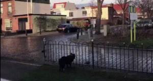 Pies rzuca piłkę pod nogi przechodniów dla zabawy
