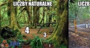 Dzikie liczby