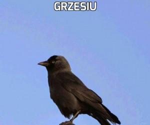 Grzesiu