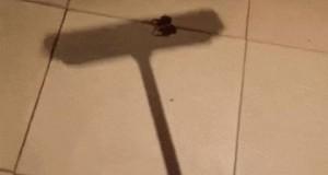 Kiedy zobaczysz w domu pająka