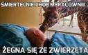 Śmiertelnie chory pracownik zoo