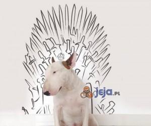 Fotogeniczny pies w akcji