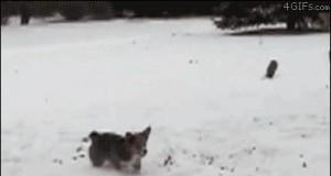 Salta na śniegu