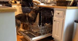 Czworonożny pomocnik kuchenny
