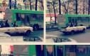 Rosyjskie cabrio - to jednak jest stan umysłu