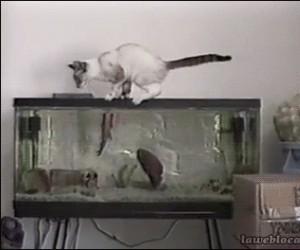 Dzisiaj sobie nie pojesz, koteł