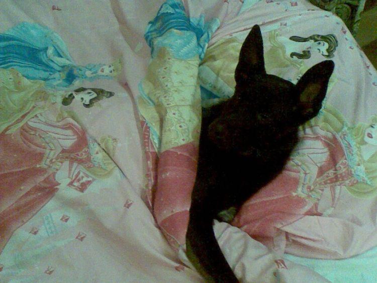 mój pies - Rysio