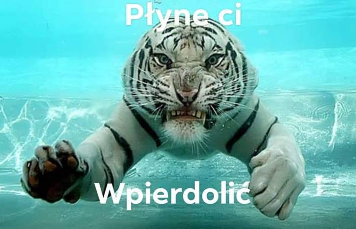 Tytułu nie ma tygrys zjadł