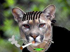 Puma Jamaika
