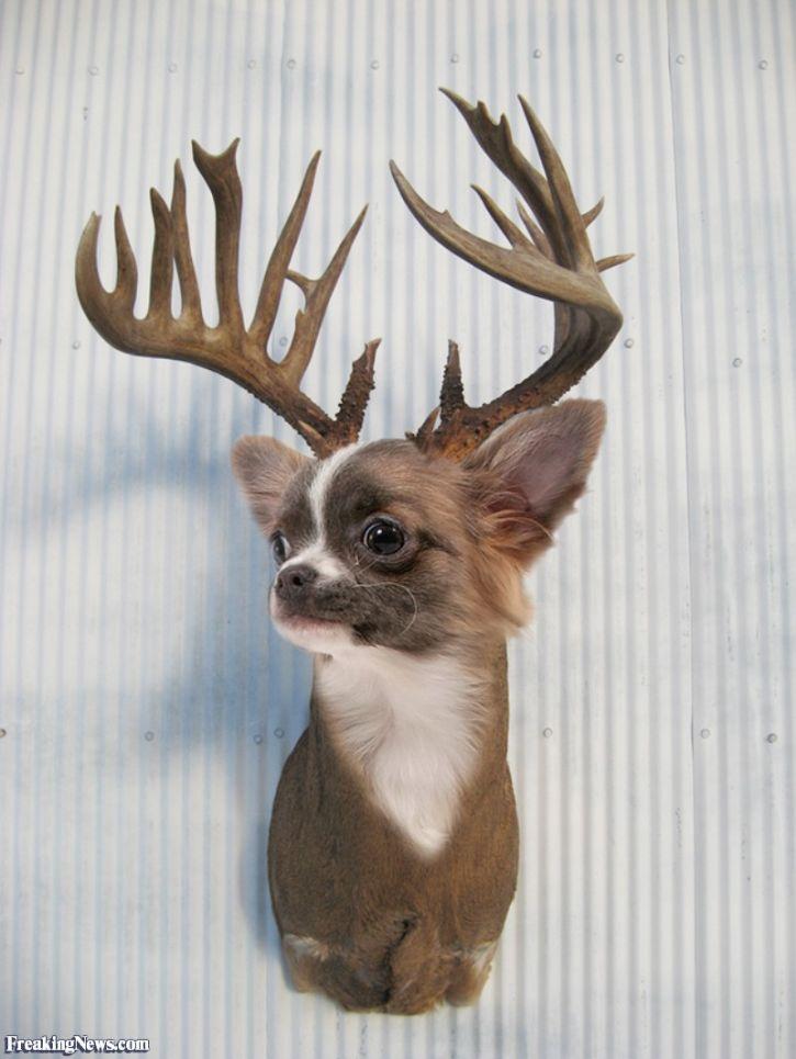 smieszny jelen