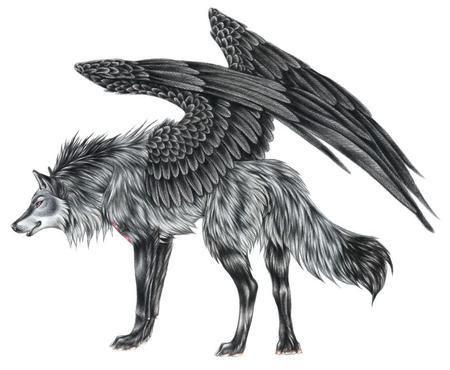 kochane wilki