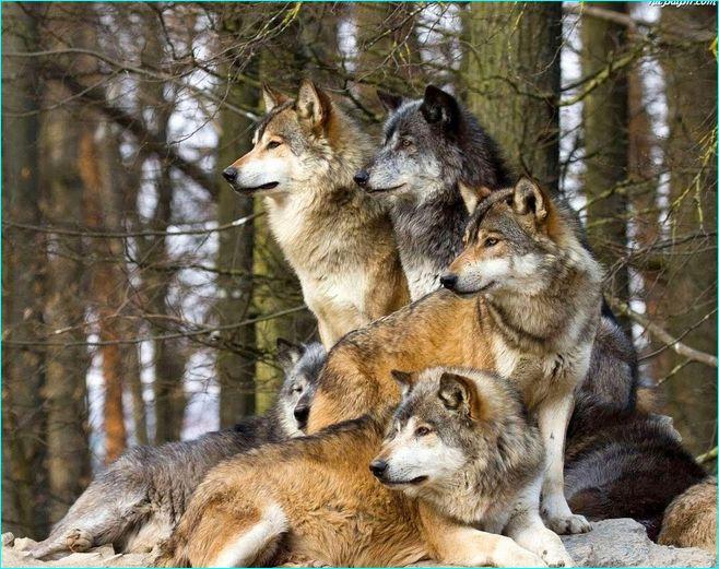 My jak rodzina ;)