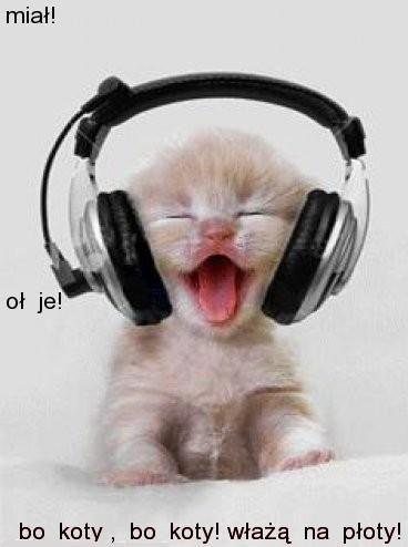 Miauu mjuzik