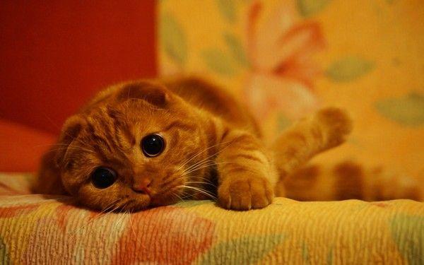 Słodziaczek Kociaczek