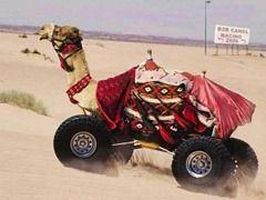 Samochód-wielbłąd