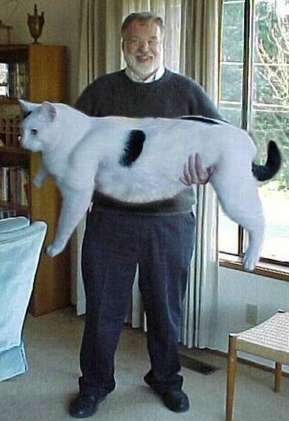 Mój półroczny kotek kotek :D