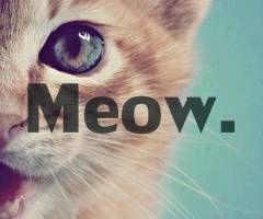 MEOW! :3