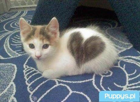 Kotek który nas kocha