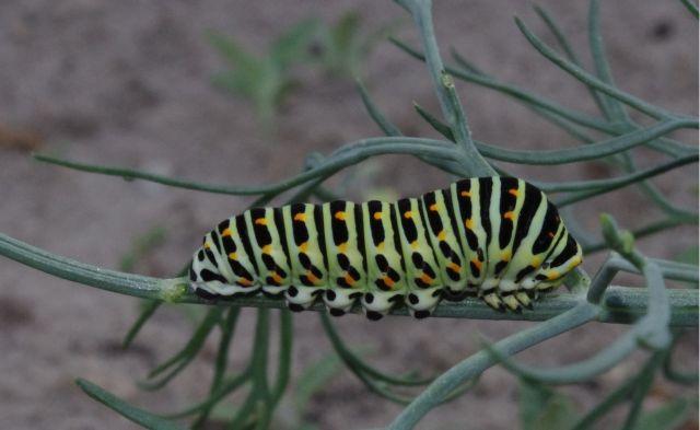 Nie wiem co to jest jakiś robak :)