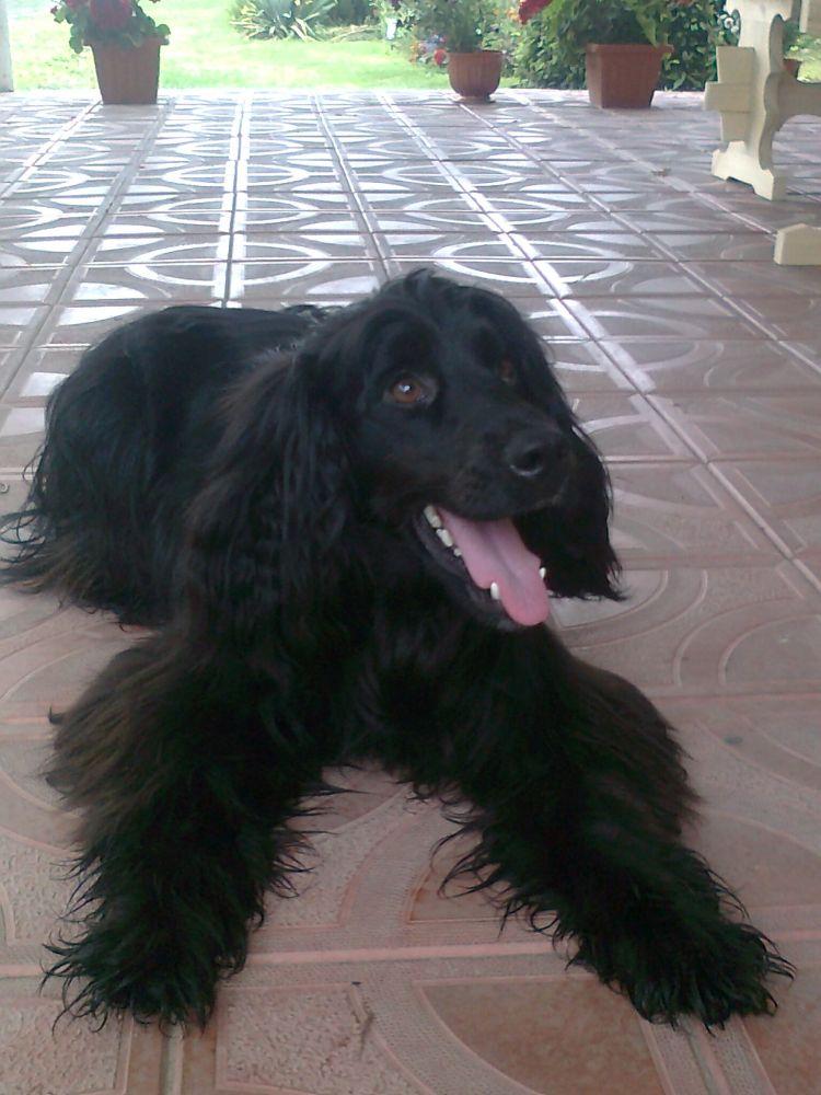 Mój pies Cezar