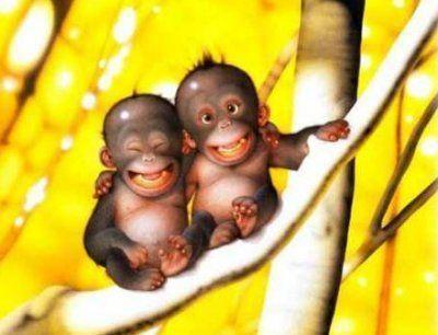 małpeczki