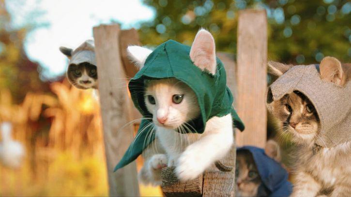 Gdy Koty przejmóją Assassin's Creed
